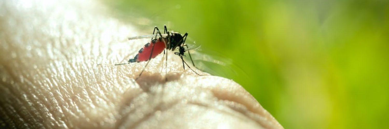 Bug Spray For yard
